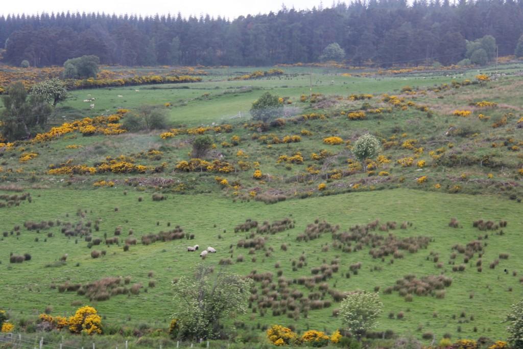 Skotland 04-06-2014 10-04-04